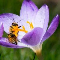 Весна однако ??? :: Viktor Schwindt