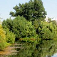 парк :: Irine kolesova