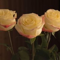 Кремовые розы :: Aнна Зарубина