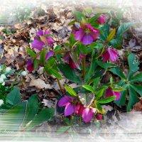 Нежность весны :: Nina Yudicheva
