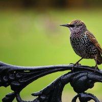 Птичка :: Ирина Бруй