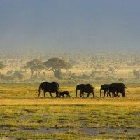 Жизнь африканской саванны 2 :: Марина Мудрова