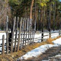 Земля прощается с зимою... :: Лесо-Вед (Баранов)