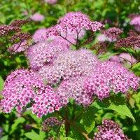 цветы июля :: Lika Light