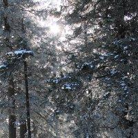 Солнце спряталось в чаще лесной :: Олеся Фокина