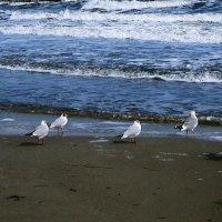 Море и птицы ( 3 ) :: Людмила