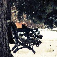 Одинокий Парк :: Сергей Погарельский