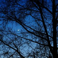 луна :: Анастасия Сидорова