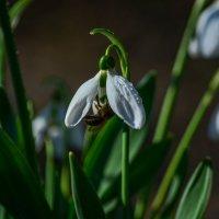 Весна :: ALEXANDR L