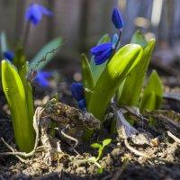 Весна :: catonbox