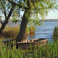 Старая лодка. :: Сергей Фунтовой
