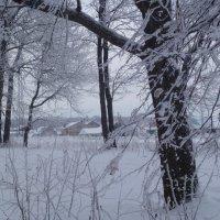 зимний лес :: НАДЕЖДА КЛАДЧИХИНА
