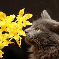 Не всё коту масленица :: Элеонора Бескостая