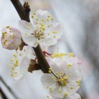 Весна идет!Весне дорогу! :: Юлия