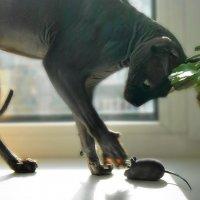 Кошки-мышки :: nika555nika Ирина