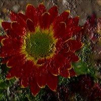 Последние цветы в году - хризантемы :: Нина Корешкова