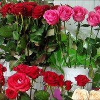 Розы в строю :: Нина Корешкова