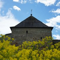 Ивангородская крепость. Широкая башня :: Елена Павлова (Смолова)