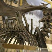 Скелет древнего зверя :: Андрей Исаев