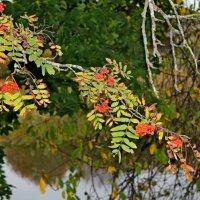 Я люблю осень... :: Mari Kush