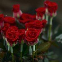 Розы. :: Татьяна