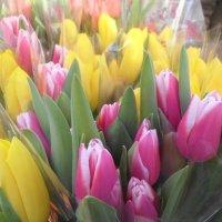 Тюльпаны :: BoxerMak Mak