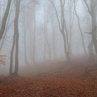 Прогулка в тумане :: Юрий Шевченко