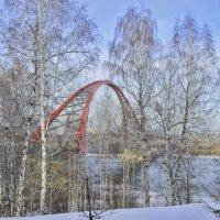 С видом на Бугринский мост :: galina tihonova