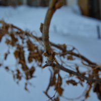 Деревце :: Света Кондрашова