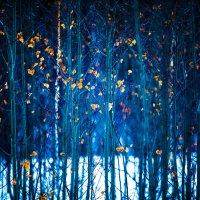 Синий лес :: Павел Крутенко