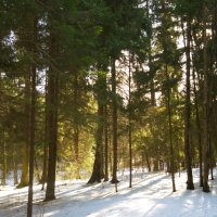 Зима-Летто :: Екатерррина Полунина