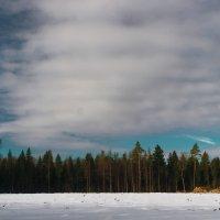Вырубленный лес :: Екатерррина Полунина
