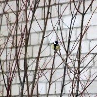 Берегите природу, иначе она превратится в кирпичную стену! :: Андрей Скорняков