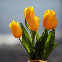 Желтые тюльпаны :: Леонид