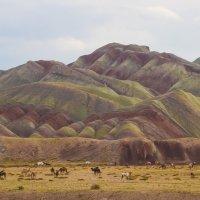 Разноцветные горы :: Angelica Po