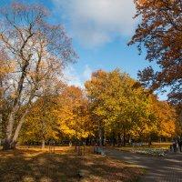прогулка по парку :: Edita Rimkute