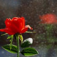 Весенний луч солнца цветок озарил... :: Александр Попов