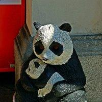 панды :: Александр Корчемный