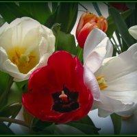 Весенние цветы :: Сергей Карачин