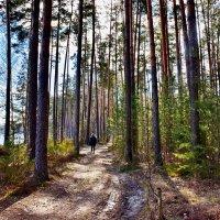 В  весеннем  лесу.... :: Валера39 Василевский.