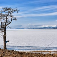 Одинокая лиственница на берегу Хубсугула :: Виктор Никитин