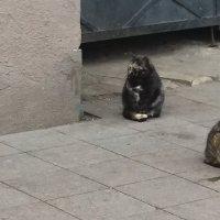 Коты на Приморском бульваре :: Владимир