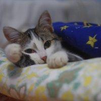 не видите, что я сплю ??? :: Ксения смирнова