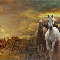 «Конь мой лЮбый, чудный мой ...» :: vitalsi Зайцев
