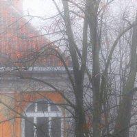 Туманное утро :: Анастасия Алёшина