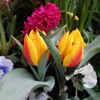 Какой пьянящий запах у весны....!!! :: Galina Dzubina