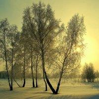 Тишина :: Виктор Корсуков