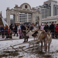 Северные олени :: Светлана Shtabel