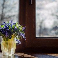Весна на моём окне. :: Елена Остапова