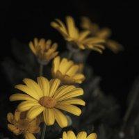 желтые цветы... :: Лариса Н